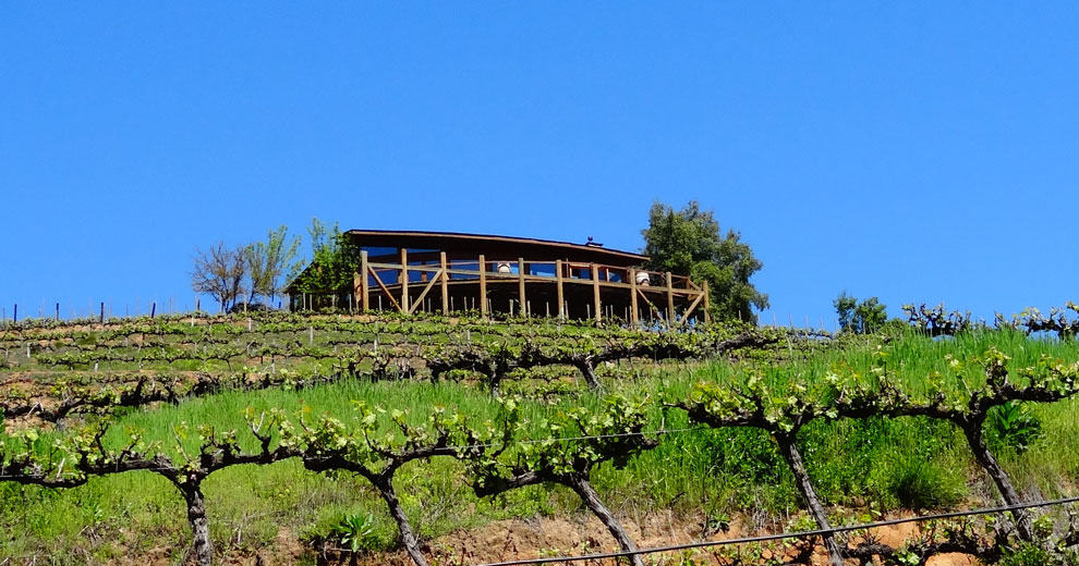 1467977691 6343 O Wine Tours Colchagua Chile